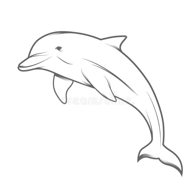 Line Art Illustration Style : Dolphin illustration stock vector of mammals