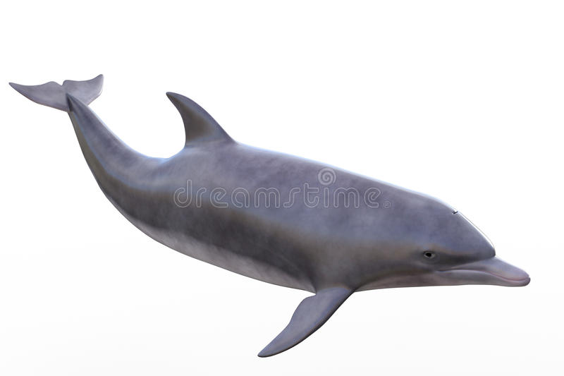Dolphin isolated. On white, additional PNG attached on transparent layer for your convenience
