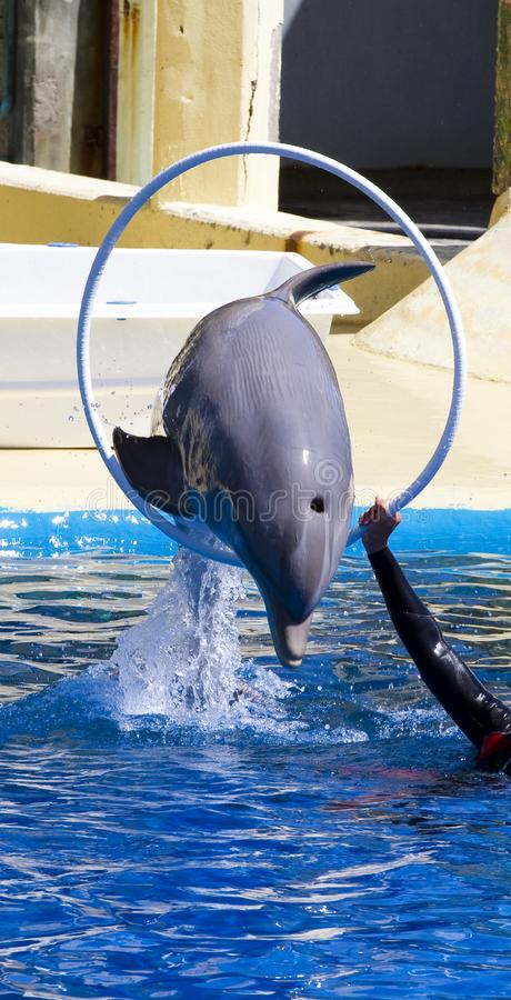 Download Dolphin jump out stock image. Image of male, mammals - 14348847