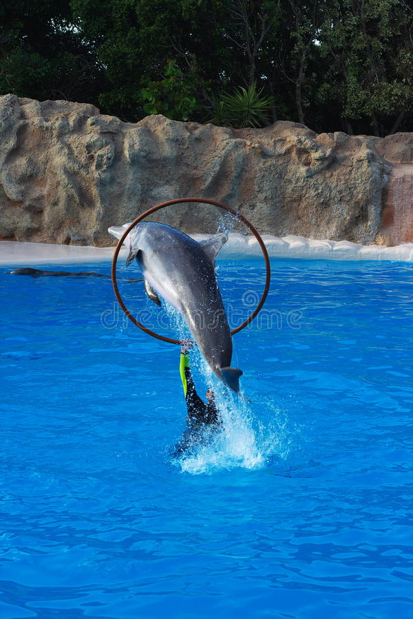 Download Dolphin Jumping Through Hoop Stock Photos - Image: 17489343