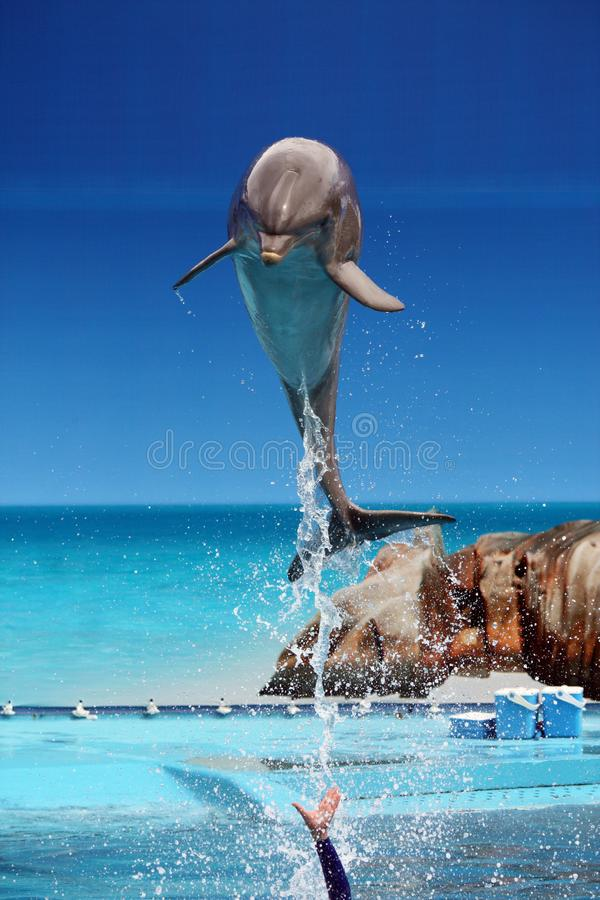 Dolphin jumping out of the water stock photos