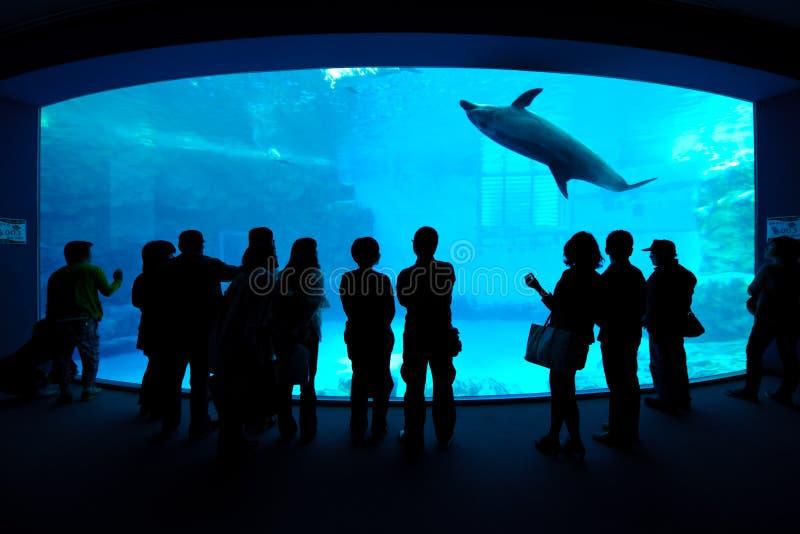 dolphin nagoya aquarium royalty free stock photography
