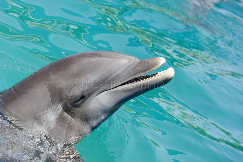 Download Dolphin In Ocean Stock Images - Image: 721174