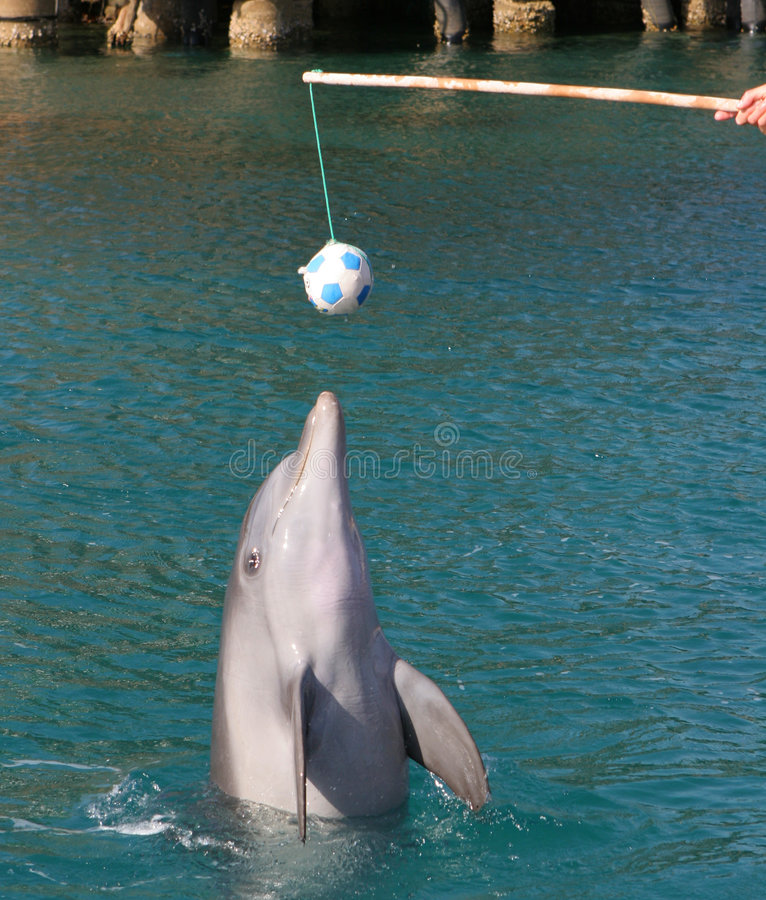 Download Dolphin playing with ball stock image. Image of game, aquarium - 1633857