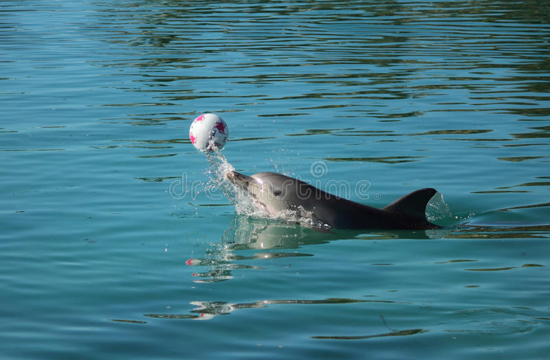 Dolphin playing stock photos