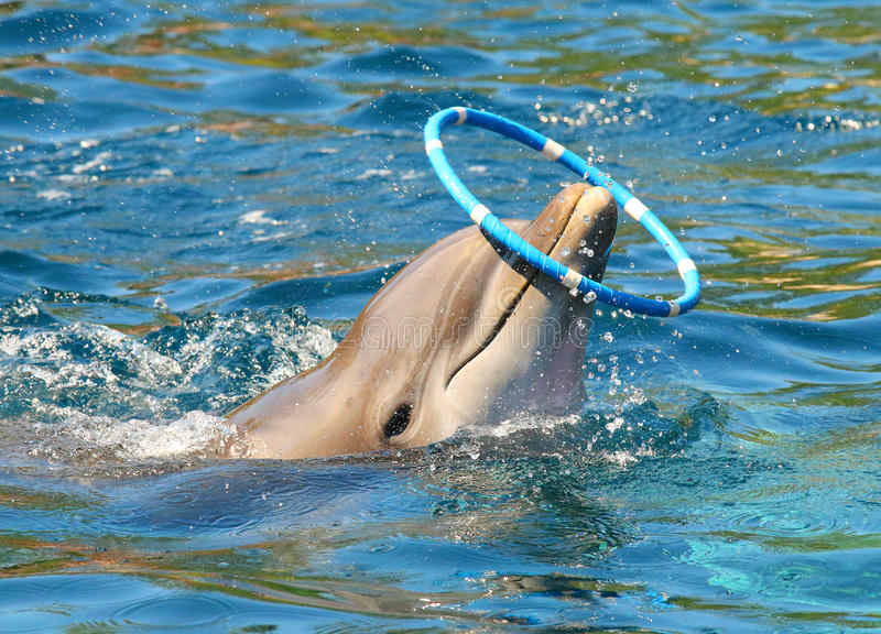 Dolphin playing. royalty free stock photography