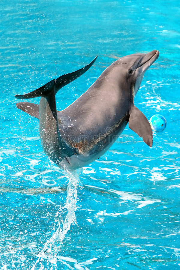 Dolphin plays. In pool. Dolphins show