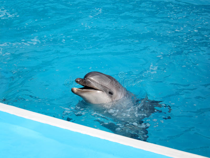 Download Dolphin in pool stock image. Image of face, game, oceanography - 23150215
