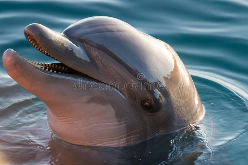 At Dolphin Reef in Eilat. Israel royalty free stock images