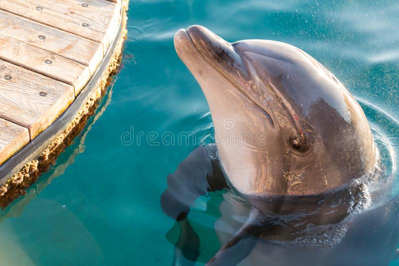 At Dolphin Reef in Eilat. Israel royalty free stock photo