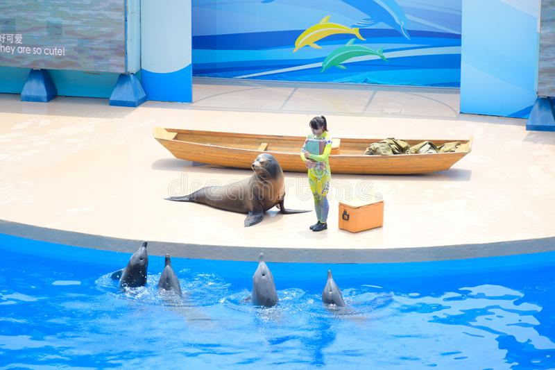 Dolphin and sea lion onstage show with its trainer performed at Hong Kong Ocean Park theater. Dolphin and sea lion show with its trainer performed at Hong Kong royalty free stock image