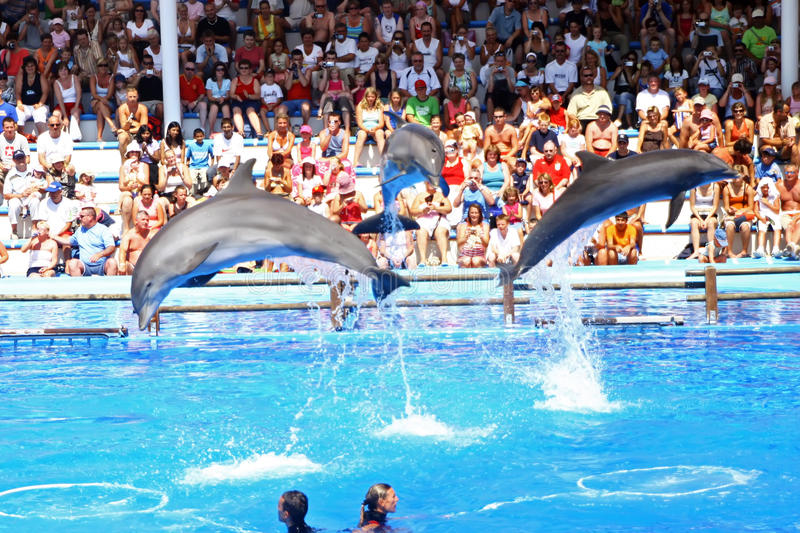 Download Dolphin show editorial stock photo. Image of balls, dolphinarium - 12414858