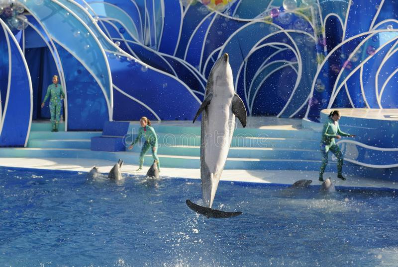 Dolphin show. USA, CALIFORNIA, SAN DIEGO, SEA WORLD, 11 JANUARY 2011: There is a representation. Dolphin Show. The dolphins who has jumped out of water. Sea royalty free stock photography