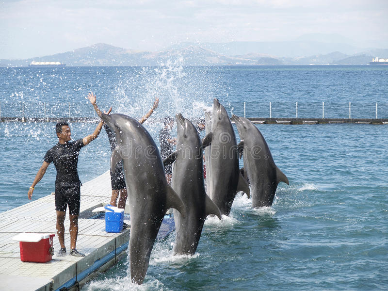 Dolphin show. At ocean adventure, subic - olongapo philippines royalty free stock photos