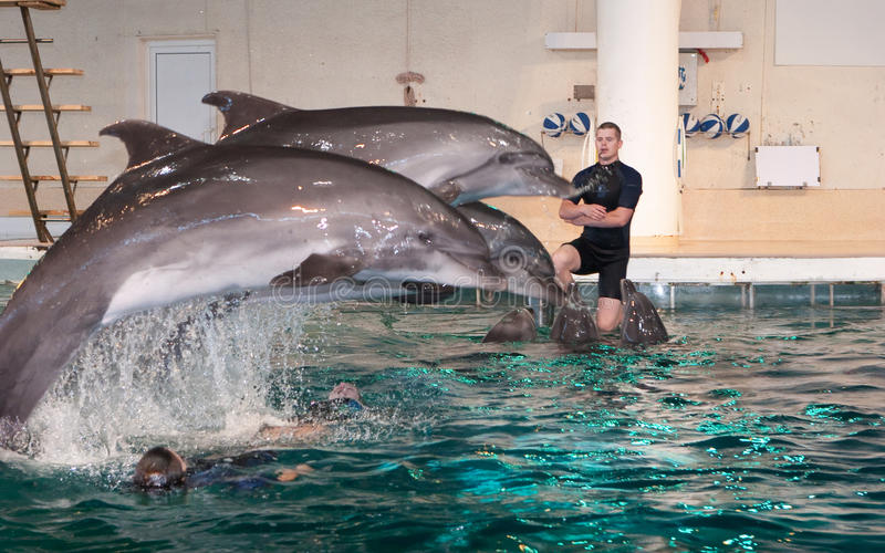 Dolphin show in the Dolphinarium royalty free stock photos