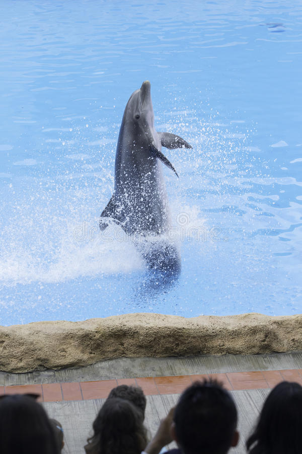 Dolphin. Show in arium Canary Island stock photo