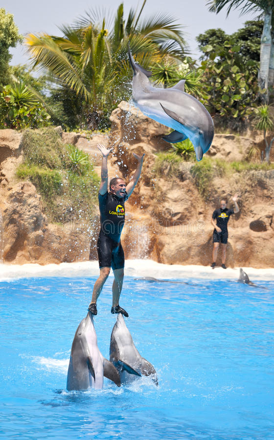 Dolphin show in the Loro Parque, Tenerife. PUERTO DE LA CRUZ, TENERIFE - AUGUST 10: Dolphin show in the Loro Parque, which is now Tenerife's second largest stock photography