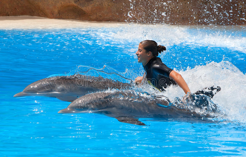 Dolphin show in the Loro Parque. Which is now Tenerife's second largest attraction with europe's biggest dolphin pool on July 12, 2014 in Puerto De La Cruz stock image
