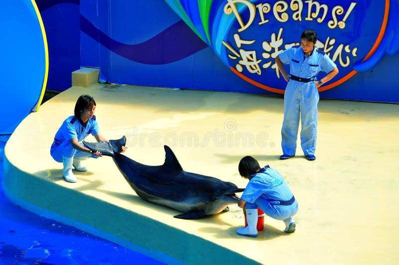 Dolphin show at ocean park hong kong royalty free stock images