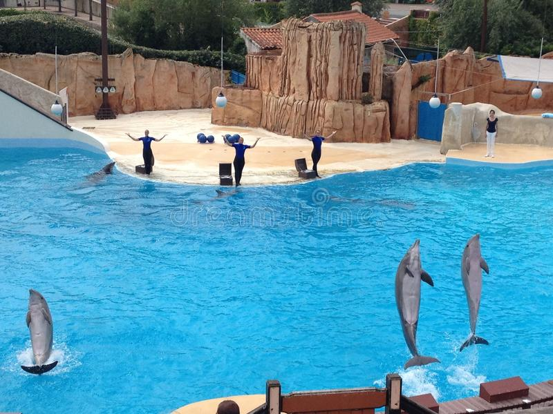 Dolphin show at Parc Asterix, France. Dolphin show at the French entertainment park Parc Asterix next to Paris, France stock image