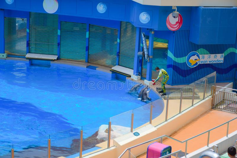 Dolphin shows with its trainer performed at Hong Kong Ocean Park theater. A very popular tourists destination in Hong Kong stock photos