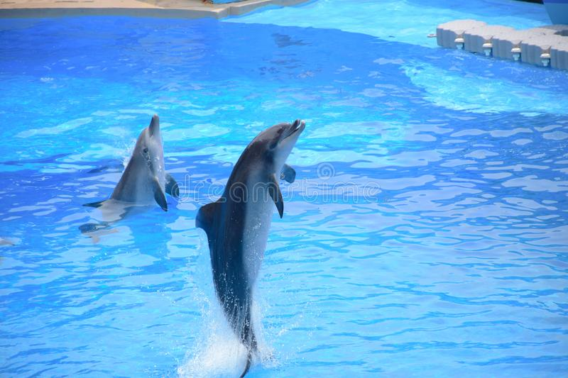 Dolphin shows performed at Hong Kong Ocean Park theater. A very popular tourists destination in Hong Kong stock image