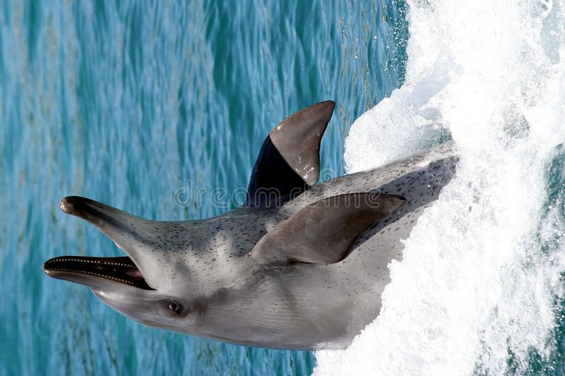 Dolphin Smile royalty free stock images