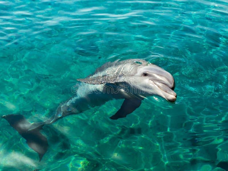 Dolphin smiles like Mona Lisa stock images