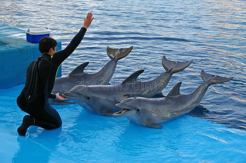 Dolphin trainer. Feeding dolphins