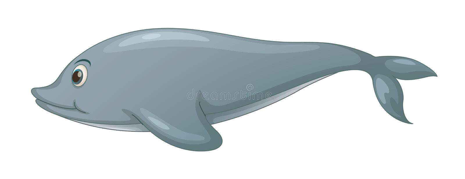 Dolphin On White Royalty Free Stock Photography