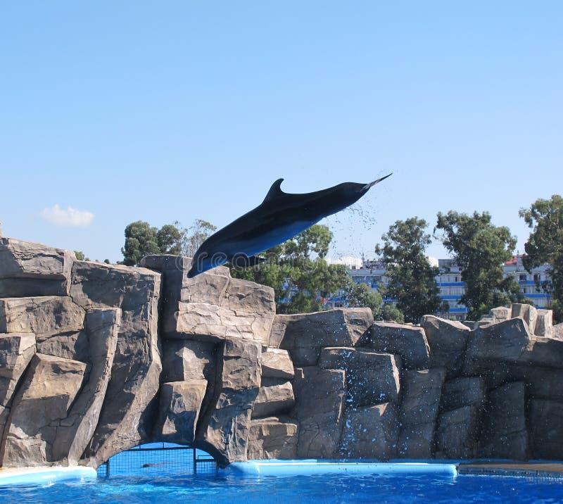 Dolphinarium чудесное посещение стоимости места стоковые фотографии rf