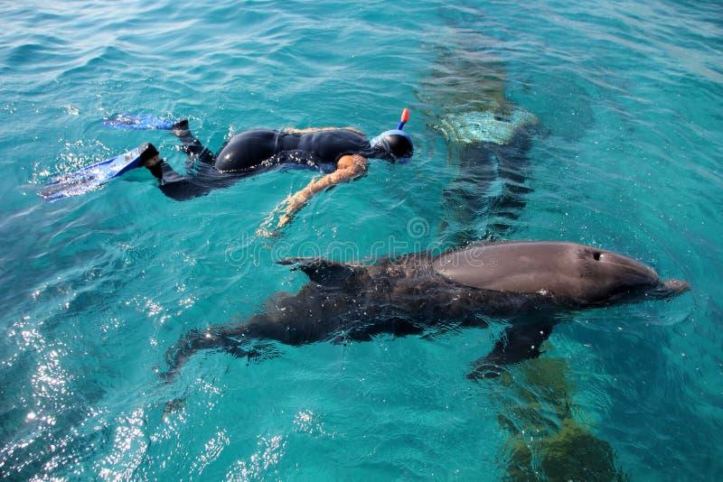 Dolphinarium in Eilat stock afbeelding