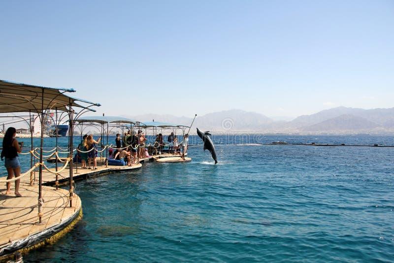 Dolphinarium in Elat stockbilder