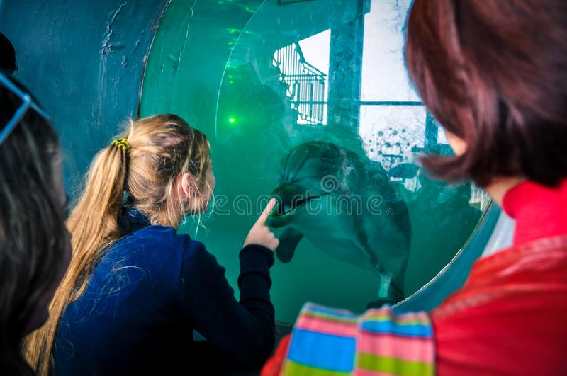 Dolphinarium meeting people and dolphin. stock photo