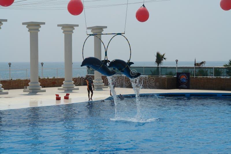 Dolphinarium in Turkije Vliegende dolfijnen royalty-vrije stock fotografie