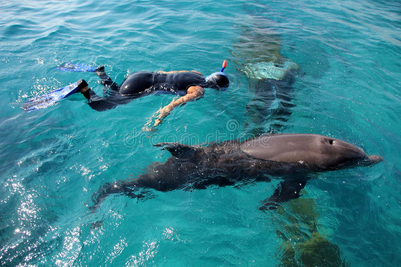 Dolphinarium w Eilat obraz stock