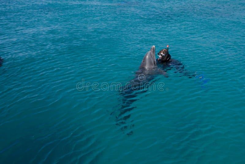 dolphine сыгранное в Красном Море, Eilat Израиле стоковая фотография rf