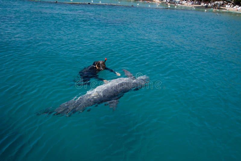 dolphine jugado en el Mar Rojo, Eilat Israel imágenes de archivo libres de regalías