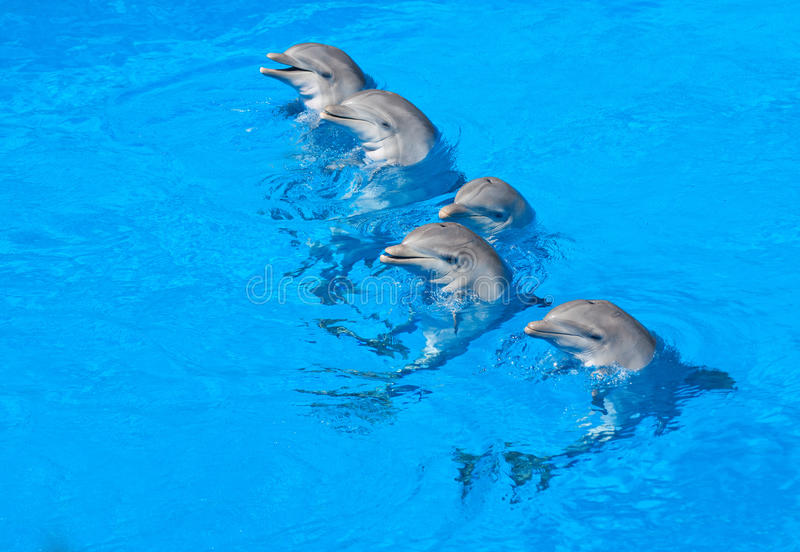 Download Dolphins Royalty Free Stock Images - Image: 23791139