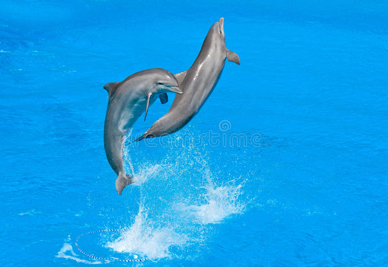 Download Dolphins stock image. Image of nature, dolphin, display - 23791173