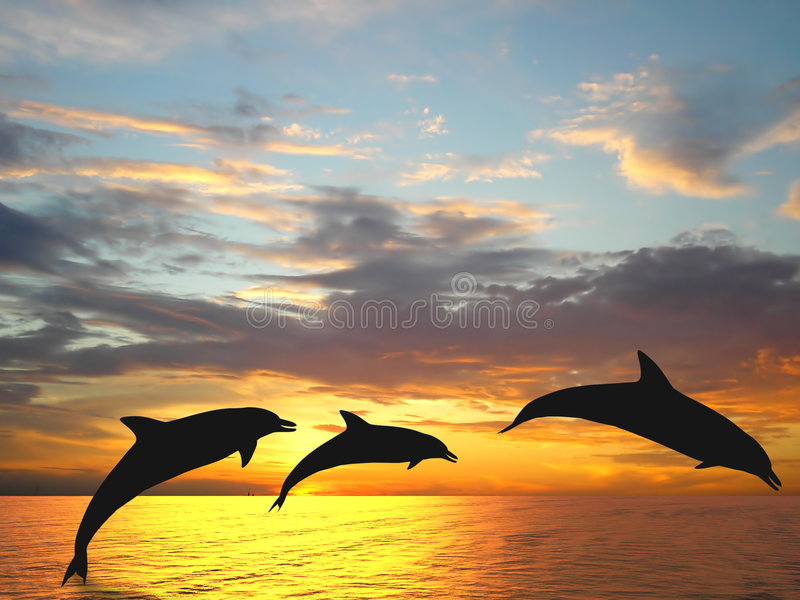 Dolphins. Three dolphins over orange sea