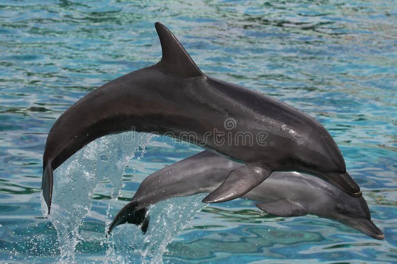 Dolphins Bow Jumping royalty free stock image