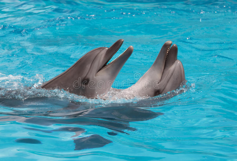 Dolphins flirting