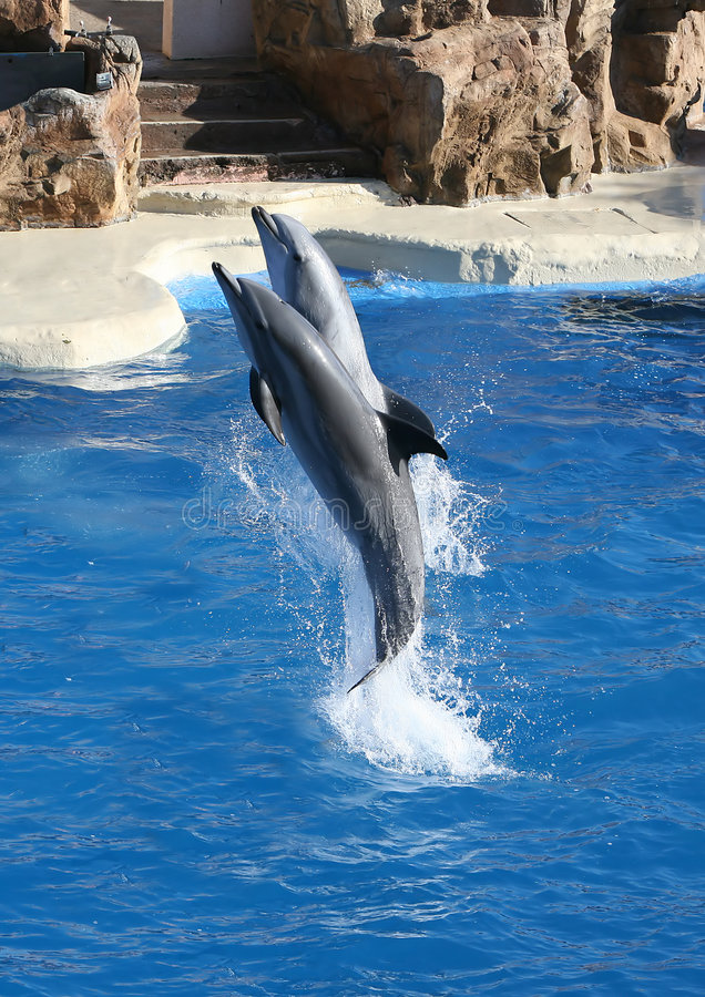 Download Dolphins Jumping stock photo. Image of graceful, pacific - 1287678