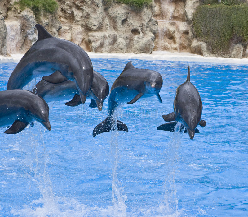 Dolphins jumping royalty free stock image