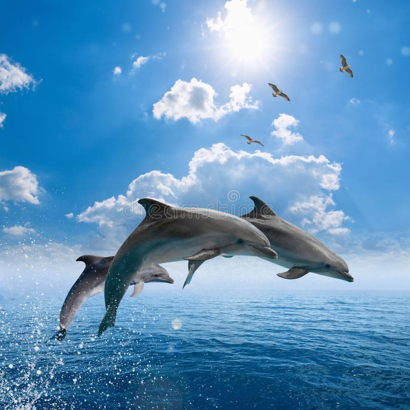 Dolphins jumping out of blue sea, seagulls fly high in blue sky stock photography