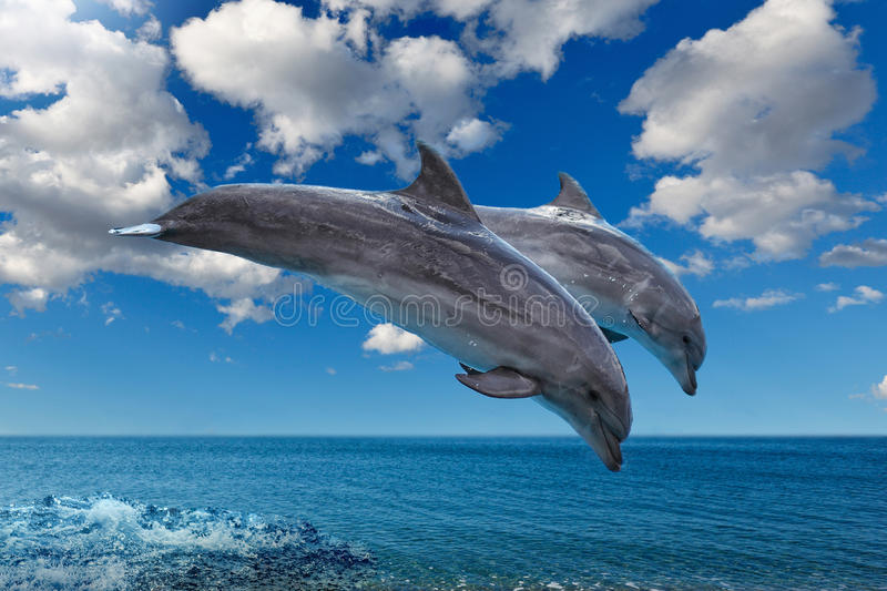 Dolphins jumping on the sea royalty free stock images