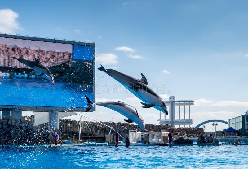 Dolphins jumps in Port of Nagoya Public Aquarium stock images