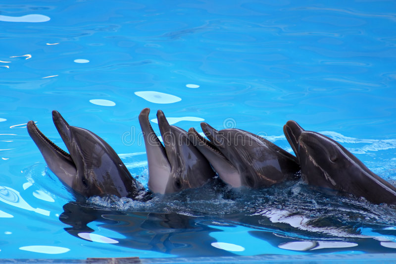 Dolphins play stock photography