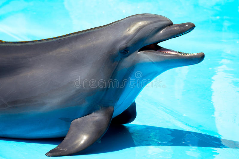 Dolphins Popped Out Of The Pool Royalty Free Stock Photos